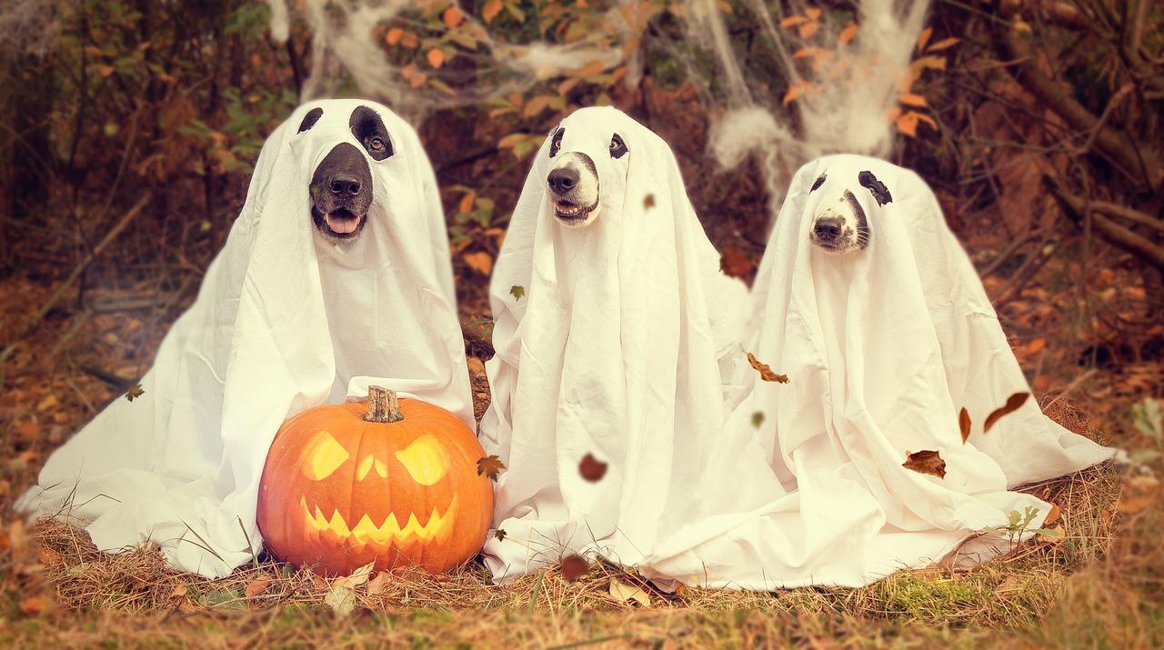 ハロウィンは仮装の日ではない!? 外国の行事をイベント化する日本人の宗教意識を英語で説明する方法