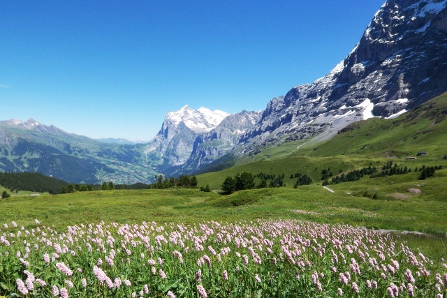 【海外駐在妻の英語準備】夫の海外駐在で2ヶ月後にスイスに帯同する妻の英語準備レッスン