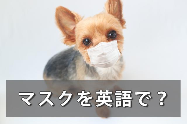 マスクを英語で言うと?不織布マスク/手作りマスクの言い方は?